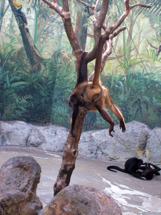自然動物園63