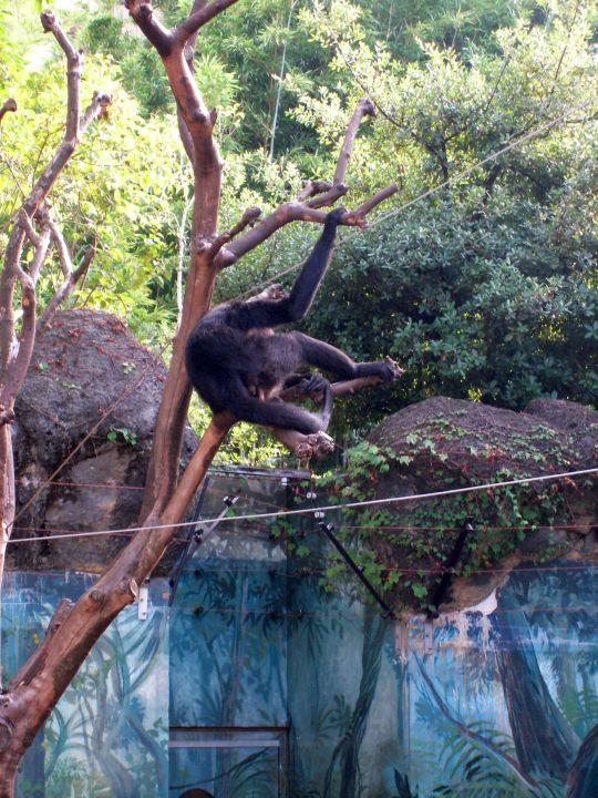 自然動物園64
