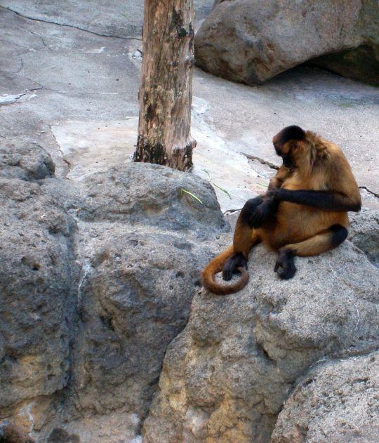 自然動物園65