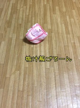 20160911_2.JPG