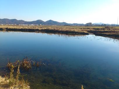 佐野の小中できれいな池を発見