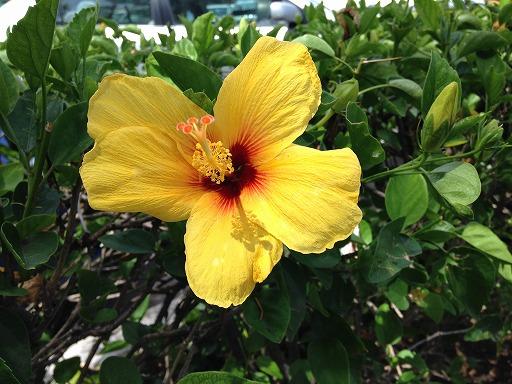 hawai-3-009.jpg