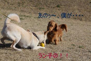 IMG_0147-1.JPG