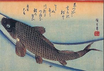 歌川広重『「魚づくし」 鯉 (山庄版)』.jpg