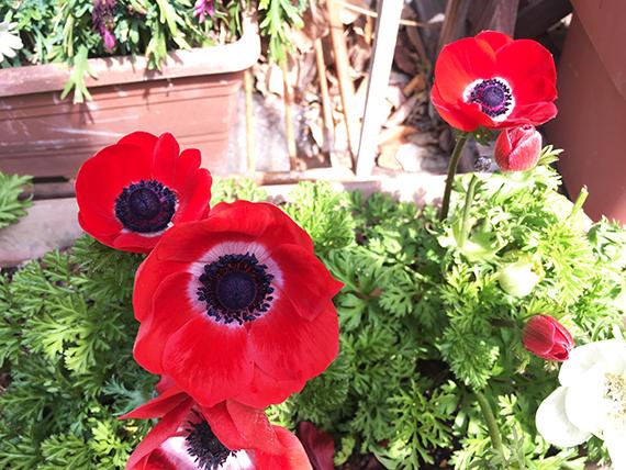 anemone_6927b.jpg