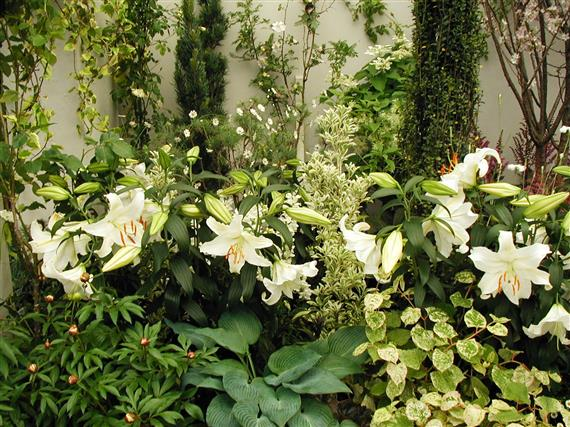 flower-P1010036a.jpg