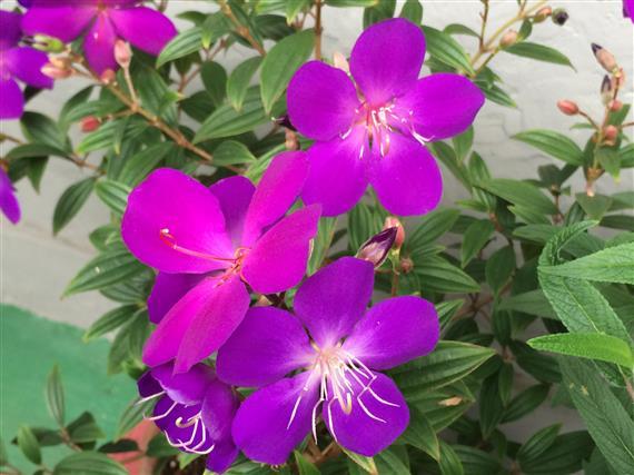 flower_018a.jpg