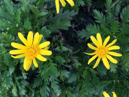 flower_026a.jpg