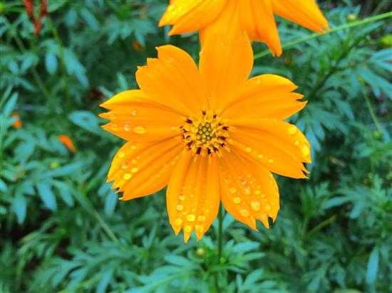 flower_071a.jpg