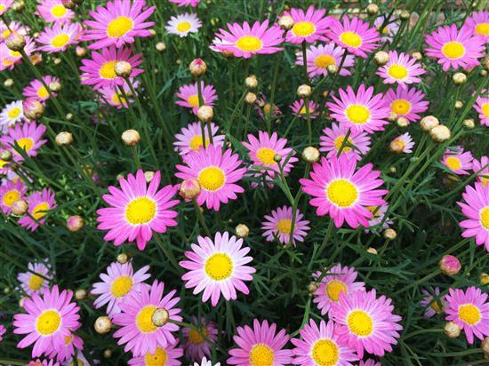 flower_124a.jpg