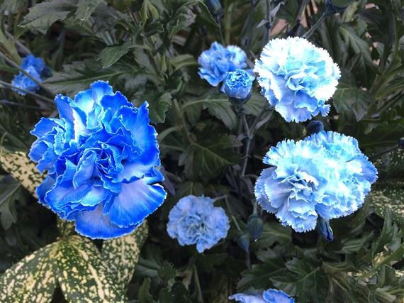 flower_1311a.jpg