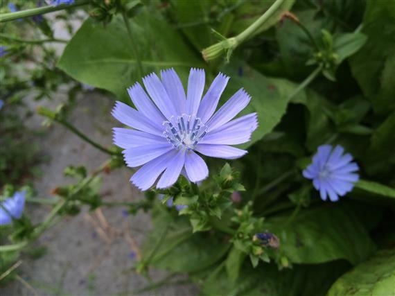 flower_168a.jpg