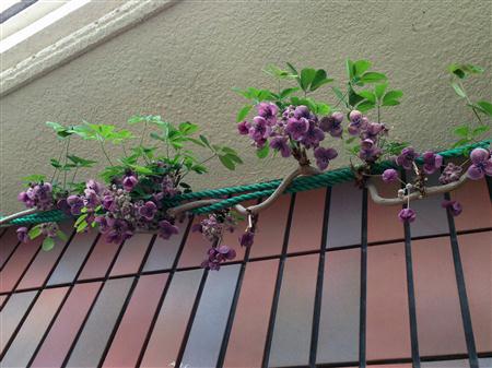 flower_2830a.jpg