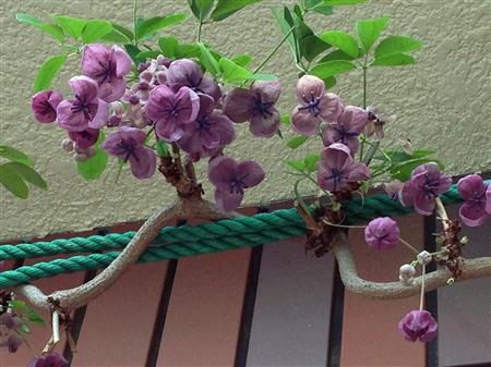 flower_2833a.jpg