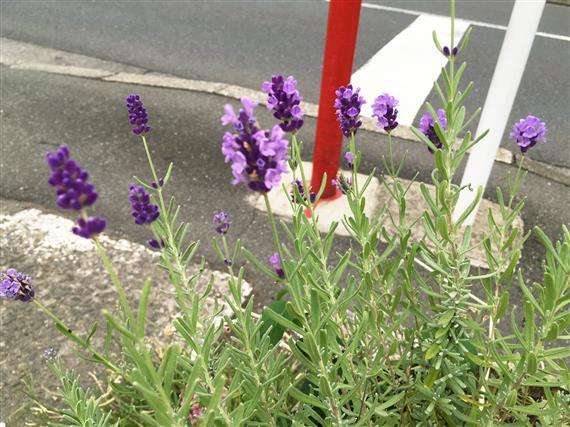 flower_4274a.jpg