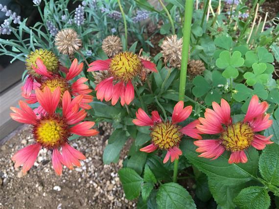 flower_4285a.jpg