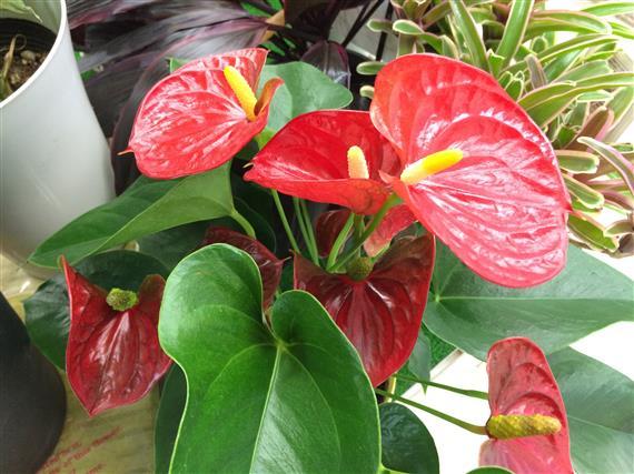 flower_4667c.jpg