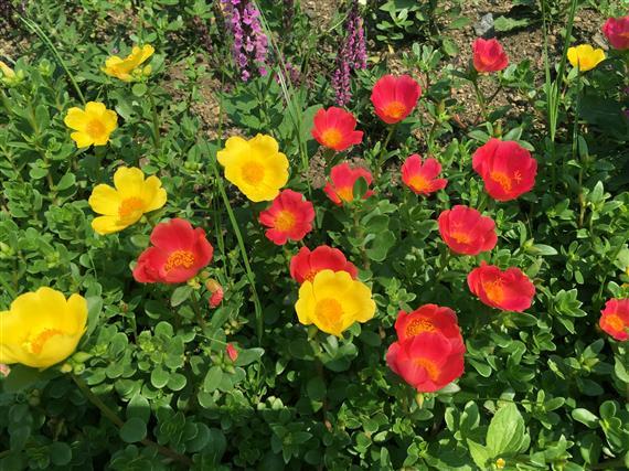 flower_5583a.jpg
