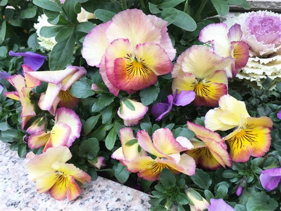 flower_5587a.jpg