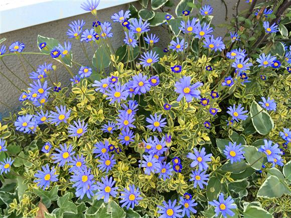 flower_8820a.jpg