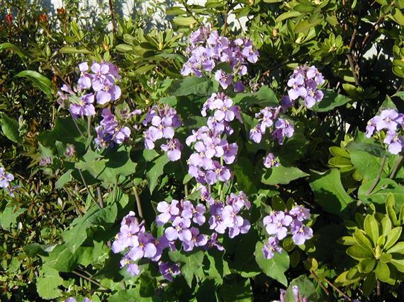 flower_P1010127a.jpg