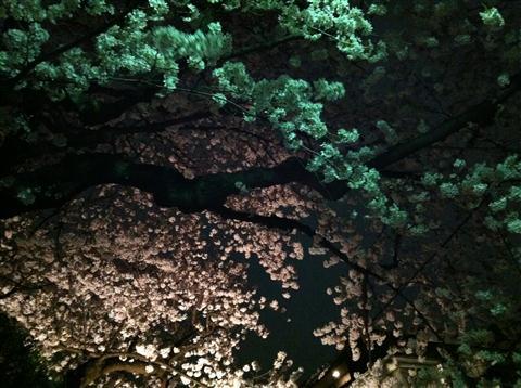 sakura_5599.JPG