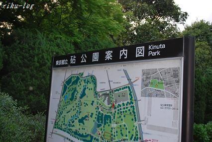 509砧公園.jpg
