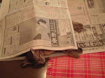 DSCF0267-新聞下のサーヤ.JPG