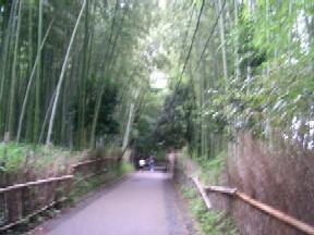 静かな竹の道