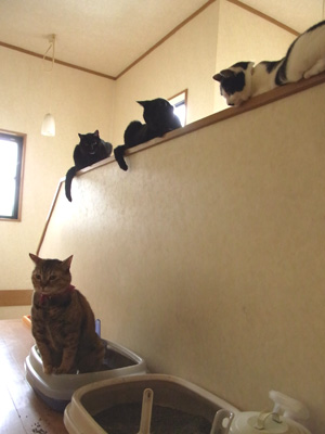 おトイレを見守る会.jpg