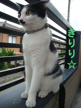 きりり☆.jpg