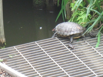 オッ!!池に入りますか@:@.jpg