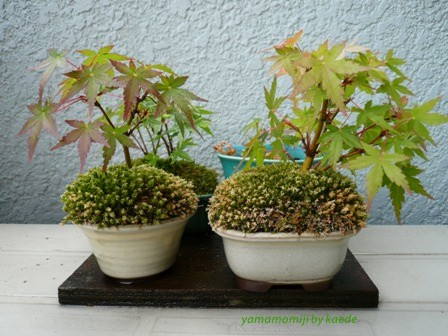 盆栽100625-3b.JPG