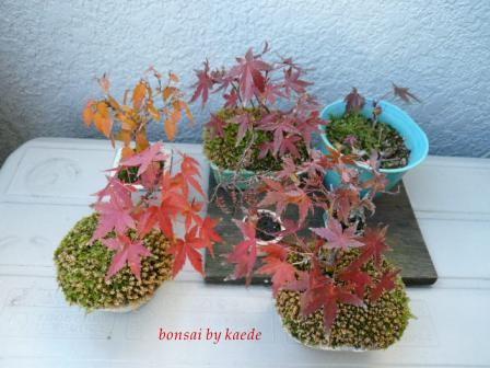 盆栽101130-01b.JPG