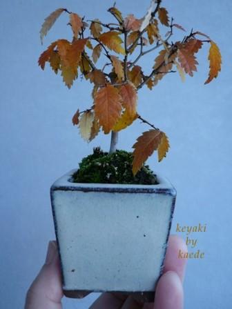 盆栽101130-02b.JPG