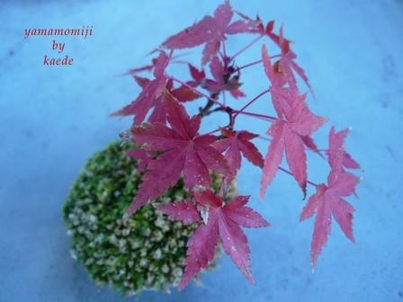 盆栽101130-05b.JPG