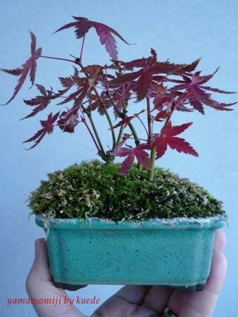 盆栽101130-08b.JPG