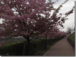多摩湖サイクリング_20130320_48