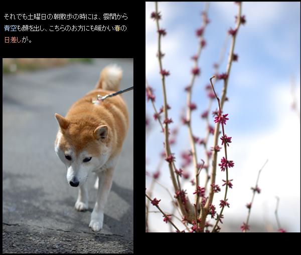 春色々A.jpg