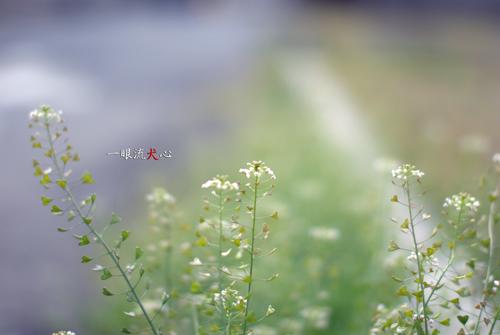 春色々B.jpg