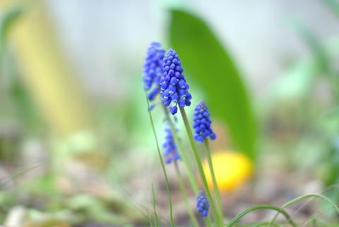 春色々C.jpg