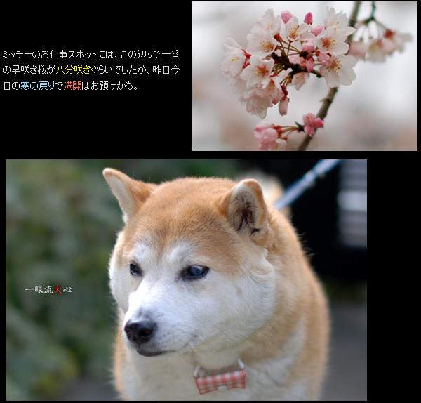 春色々F.jpg