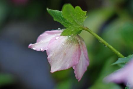 春雨A.jpg