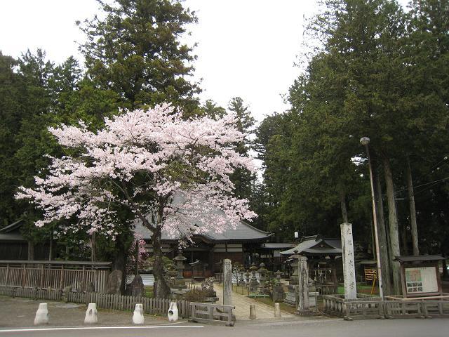 20.04.13栃木の桜 112.JPG