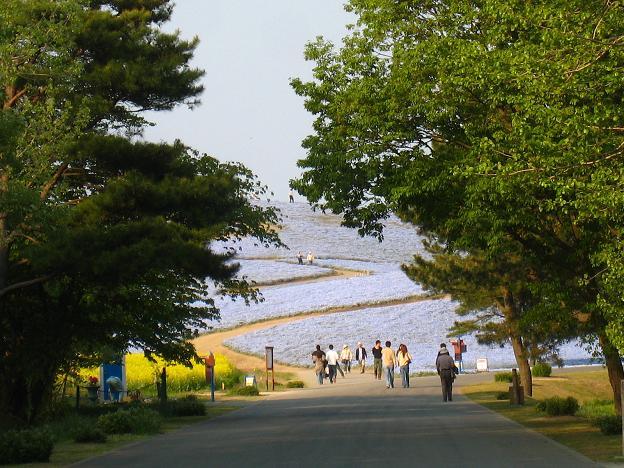 ネモフィラの丘.JPG