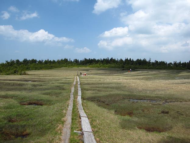 湿原.JPG