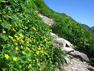 登山道と花.JPG