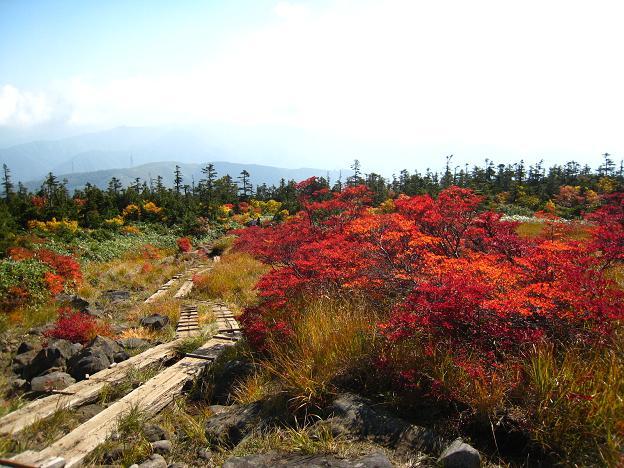 紅葉と木道.JPG