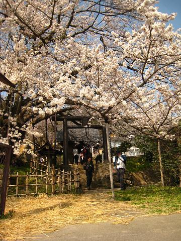 素桜神社.JPG
