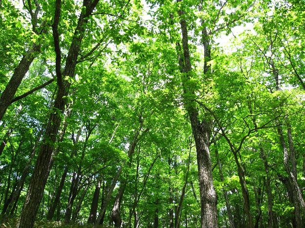 緑の木々.JPG